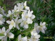Декоративные и плодовые растения для Вашей усадьбы