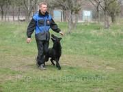 Дрессировка собак в Саратове и Энгельс. Мотивированное воспитание щенков.