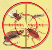 Тараканов и клопов нет